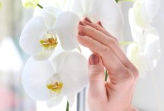 Female hands hold orchid stock image