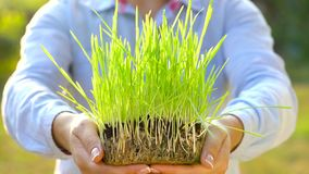 Female hands hold out handful of soil with green grass. Concept of growth, care, sustainability, protecting the earth stock video