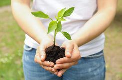 Female hands hold plant growing seedling against greenery background, space for text. Environmental protection stock image