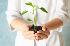 Female hands hold plant growing seedling against light background, space for text. Environmental protection stock image