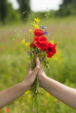 Female hands hold wildflowers. Stock Photography