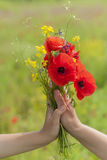 Female hands hold wildflowers. Stock Image