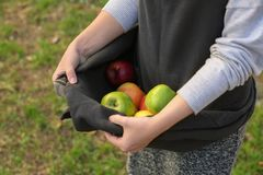 Female hands holding apples in apron, Royalty Free Stock Image