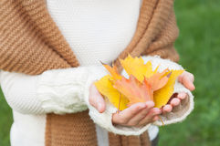 Female hands holding autumn leaves Royalty Free Stock Photography