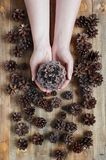 Female hands holding the pine cone royalty free stock image