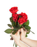Female hands holding bouquet of red roses Royalty Free Stock Images