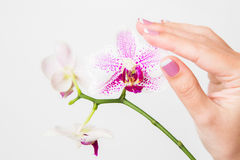 Female hands holding branch of beautiful orchid stock images