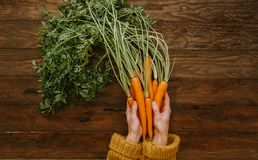 Female hands holding bunches of raw carrots. Top view Stock Image