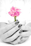 Female hands holding  carnation flowe Royalty Free Stock Photos
