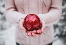 Female hands holding a Christmas red ball. Frosty winter day in snowy forest. Merry Christmas and Happy New Year Stock Photography