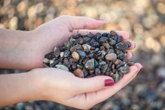 Female hands holding colorful gravels collected from the beach.  Stock Photos