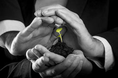 Female hands holding fertile soil from which a green sprout is g Royalty Free Stock Image