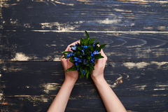 Female hands holding a flowerpot with blue snowdrops, flat lay p royalty free stock photography