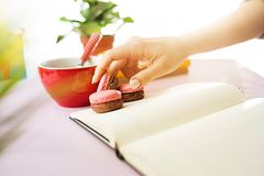 The female hands holding french macarons on trendy pink desk. Female hands holding french macarons on trendy color pink desk. Woman and stilish workplace. Cup Royalty Free Stock Image
