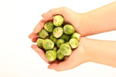 Female hands holding fresh Brussels sprouts Stock Images