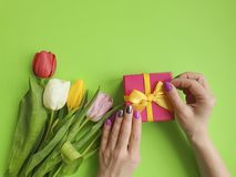 Female hands holding a gift box, romantic decoration tulip flower on a colored background. Female hands holding   gift box, tulip flower on a colored background stock photography