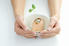 Female hands holding green plant Royalty Free Stock Images