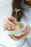 Female hands holding growing plant Stock Photo