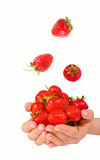 Female hands holding handful of strawberries close up. Royalty Free Stock Images