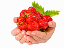 Female hands holding handful of strawberries close up. Stock Image