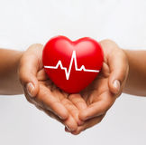 Female hands holding heart with ecg line stock photo