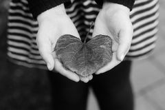 Female Hands Holding Heart Shaped Leaf. Image of female hands, dressed in striped skirt, holding heart, shaped leaf, close up Royalty Free Stock Photo