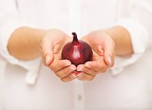 Female Hands Holding an Onion Stock Image