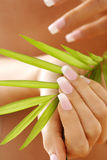 Female hands holding palm leaf Stock Photography