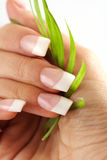 Female hands holding palm leaf Royalty Free Stock Images