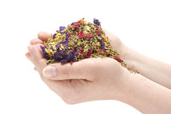 Female Hands Holding a Pile of Herbs Stock Image