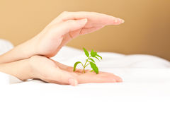 Female hands holding and protecting a small plant Stock Photos