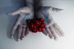 Female hands holding red geranium flowers Stock Image