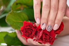 Female hands holding red roses. Beautiful womans hands with beige manicure holding flowers. Female treatment and beauty Stock Image
