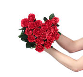 Female hands holding a red roses heart. On white background stock photo
