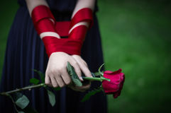 Female hands holding rose. Knitted female hands holding red rose in park Royalty Free Stock Images