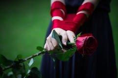 Female hands holding rose. Knitted female hands holding red rose in park royalty free stock image