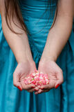 Female hands holding rose petals Royalty Free Stock Photos