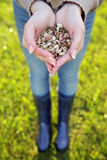 Female hands holding seeds Royalty Free Stock Photos