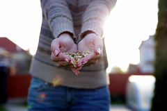 Female hands holding seeds Stock Image