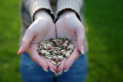 Female hands holding seeds Stock Photo