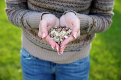 Female hands holding seeds Stock Photography