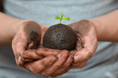 Female hands holding soil ball with small green plant. Ecology and environment, earth care concept. Stock Photo