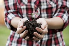 Female hands holding soil and young plant, closeup. Royalty Free Stock Image