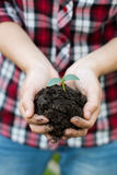 Female hands holding soil and young plant, closeup. Stock Image