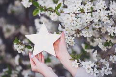 Female hands holding white glowing LED star with blooming branches on background outdoor in spring.  stock photo