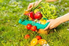 Female hands holding wicker basket with vegetables and fruits, close up royalty free stock photos