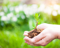Female hands holding young plant in hands against spring green b Stock Photo
