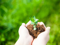 Female hands holding young plant in hands against spring green b Royalty Free Stock Image