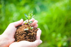 Female hands holding young plant in hands against spring green b Stock Images