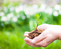 Female hands holding young plant in hands against spring green b Royalty Free Stock Photo